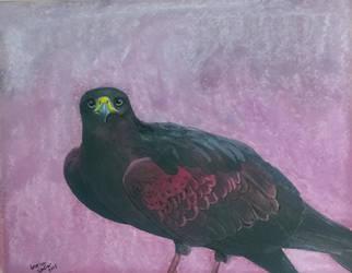 Hawk by JessicaSoulier