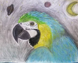 Cosmic Macaw by Rachabelle
