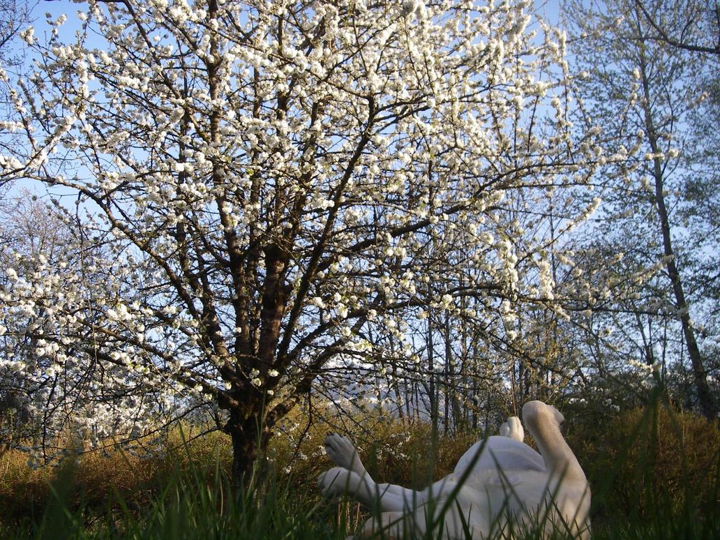cherry tree dog by Atheena