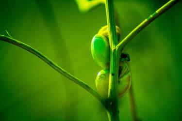 Photography - Sleepy Snailing Cuddle by romus91