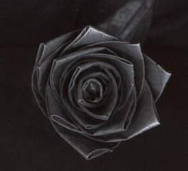 rose: top-view by Ignis1986
