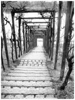 Pathways II by skugga1984