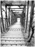 Pathways II