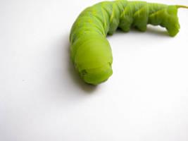 caterpillar 2 by 8xhx8