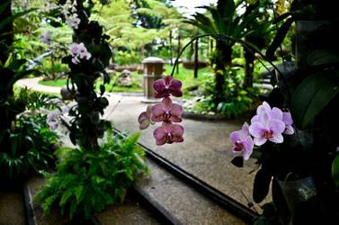 Orchids Garden 2 by 8xhx8