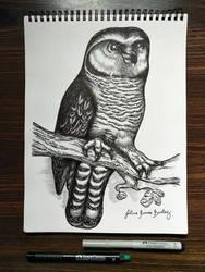 Night Owl In Grudge Style by JuliusRamosBantog