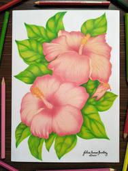 Gumamela Flower by JuliusRamosBantog