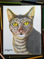 Muning The Cat by JuliusRamosBantog