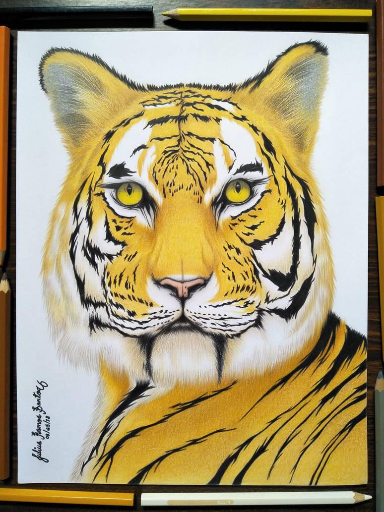 Tiger by JuliusRamosBantog