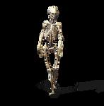 Skeleton 02