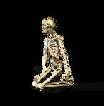 Skeleton 03