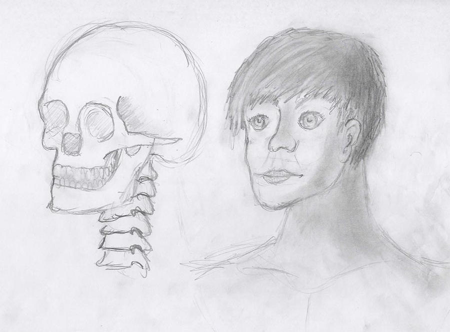 Line Drawing Of Human Face : Sketch of human face with skull reference by rockerartist on