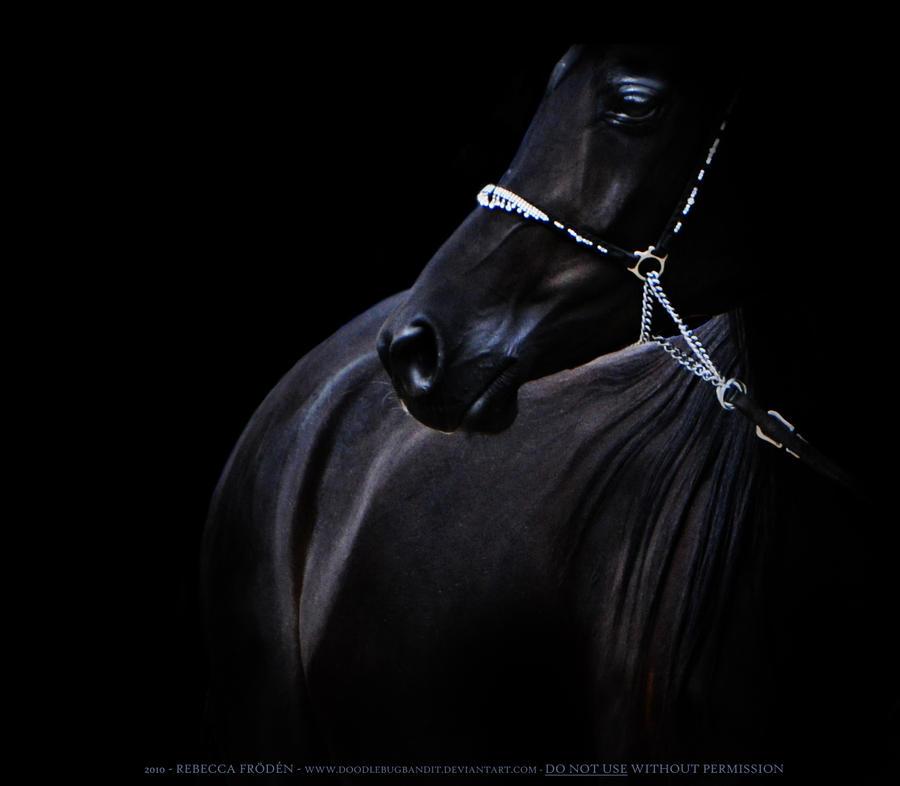 Dark stallion by DoodlebugBandit