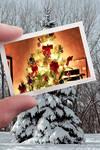 Christmas for a Pine Tree
