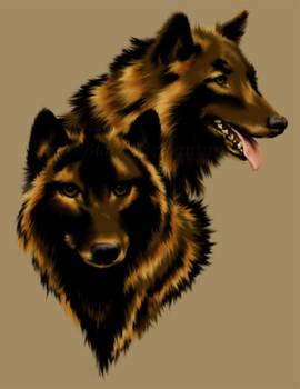 Timber wolfs