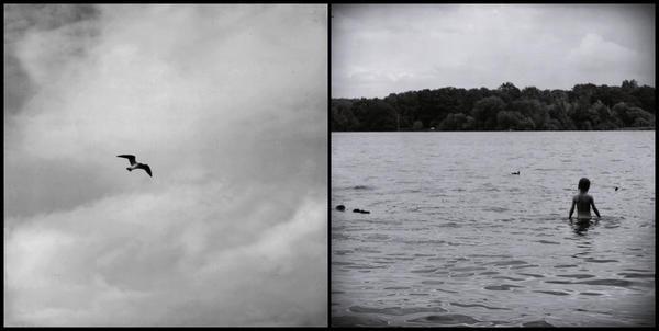 .seagull.flying. by KefirKalinka