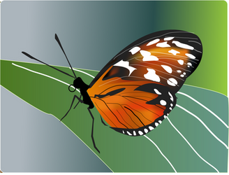 Butterfly Gradient Mesh by chenali