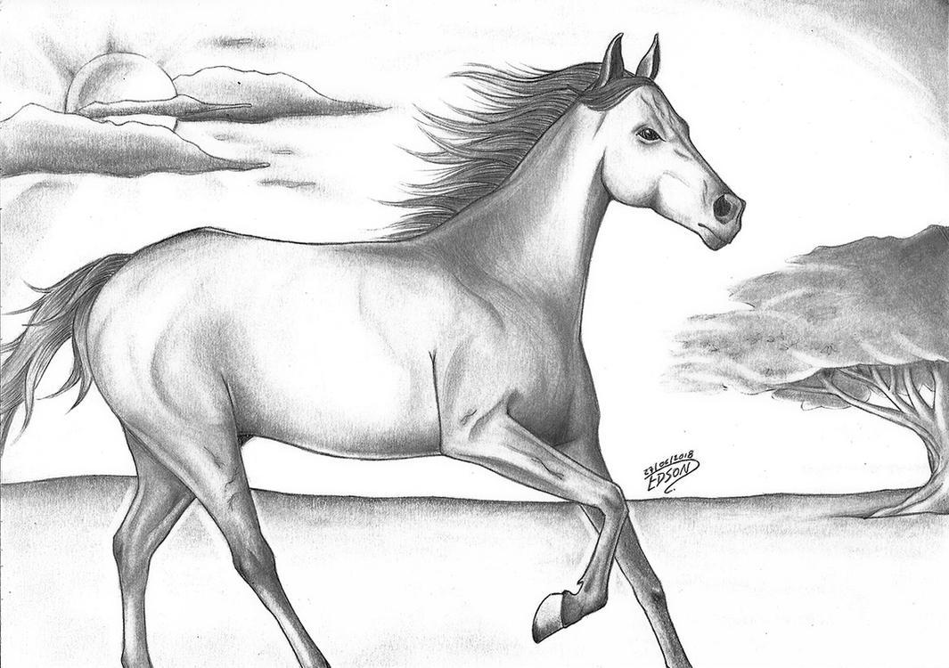 desenho cavalo by edsonrrls on deviantart