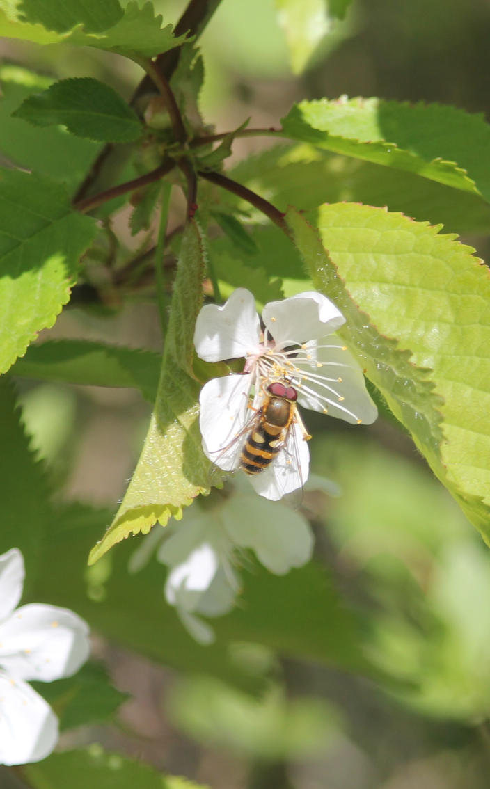 Bee in the tree by Helldoggolem