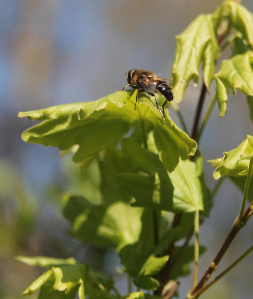 Bee snapshot by Helldoggolem