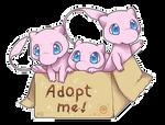 Box of Mews - Adopt me!