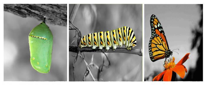 Butterfly triptych by MeganEBundy
