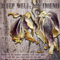 Sleep Well, My Friend...