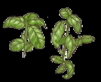 Basilic by o-Oxalis-o