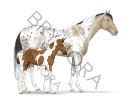 Equine Adoptable [OPEN] - REDUCED PRICE