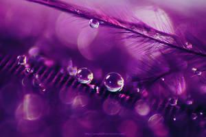 Purple by Purple20