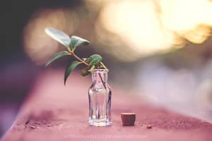 bottle by Purple20