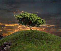 Tree-Hill Photomanip unf. by lucky-lacky