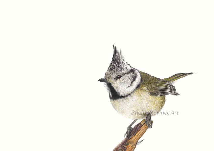 Tit by Evriale