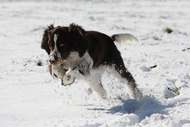 Snow dog by JuliZib