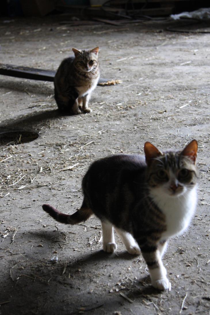 Cats by JuliZib