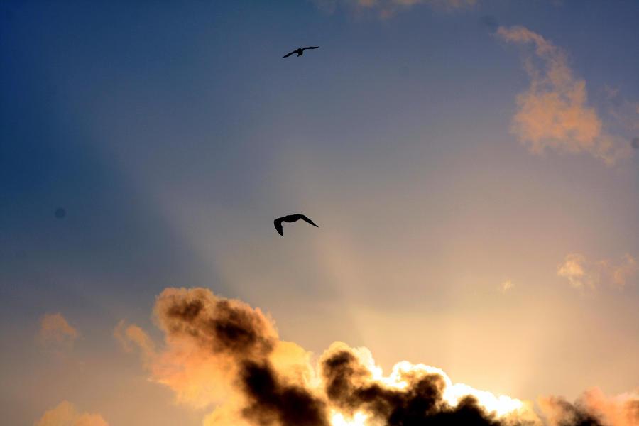 Seagull I by JuliZib