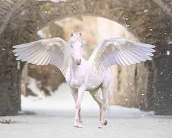 Winter Wings by fleetopossum