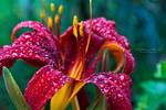 Symphonies of the rain