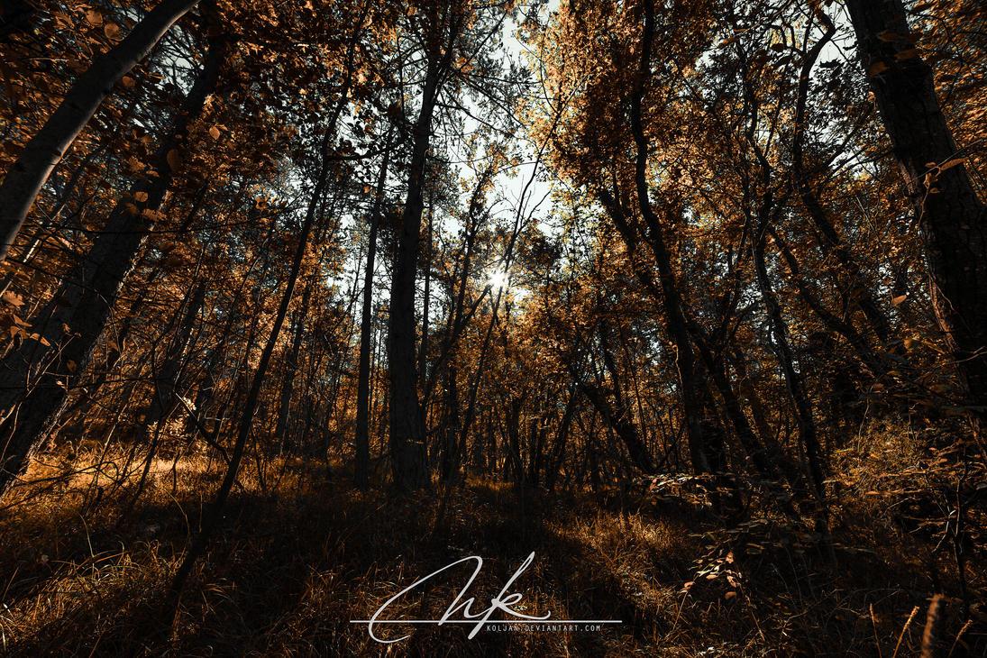 Autumn aurora by Koljan
