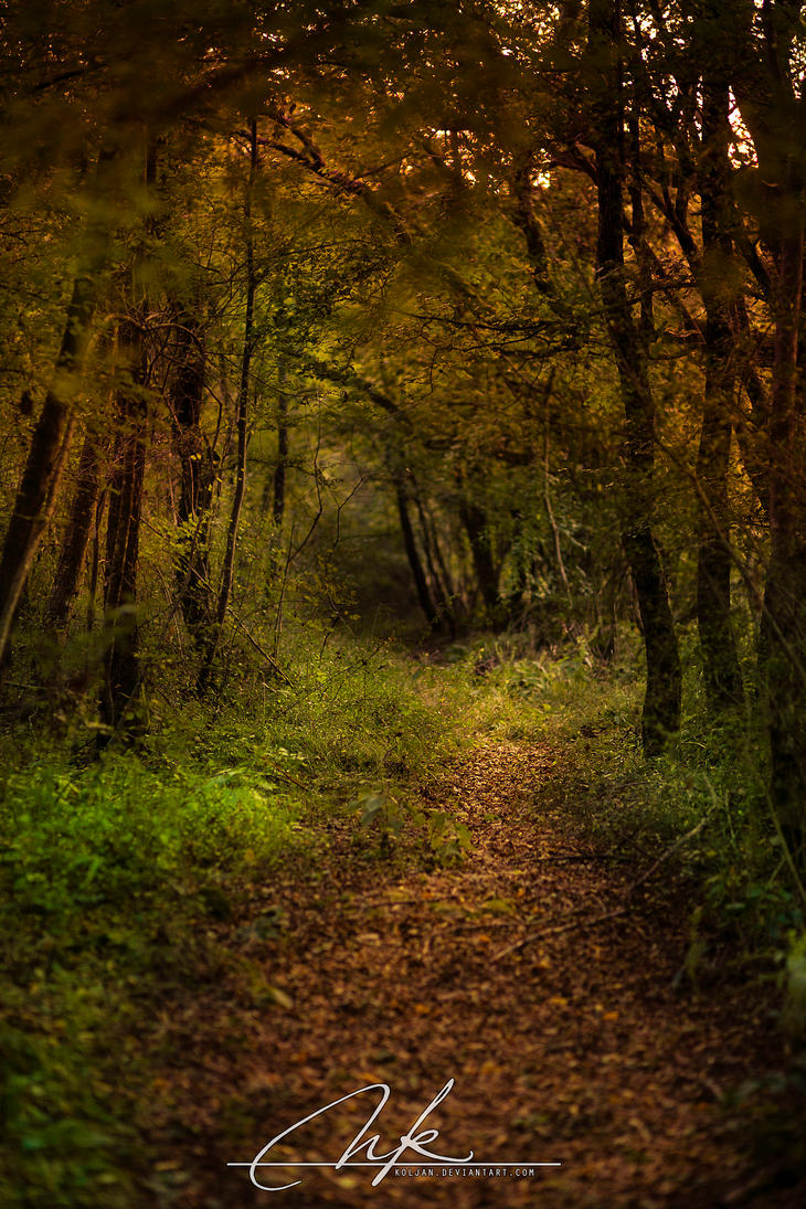 Autumns path by Koljan
