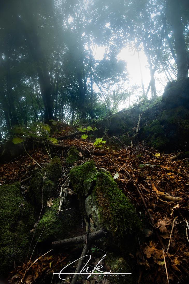 Misty forest by Koljan