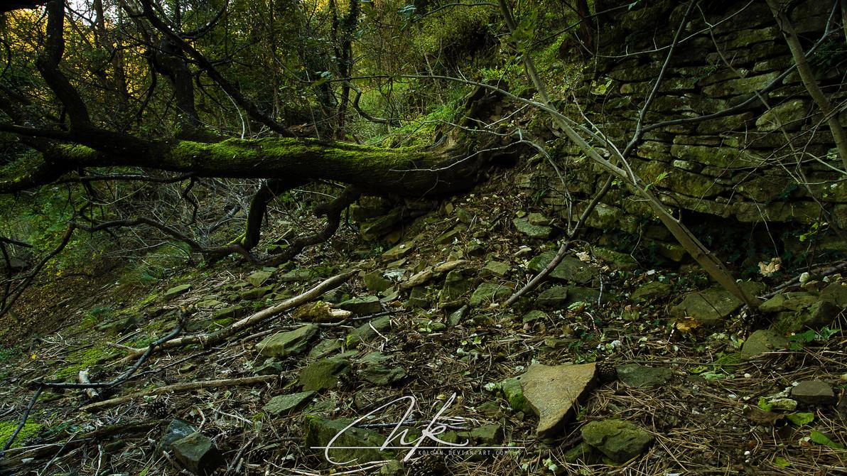 Tree debris by Koljan