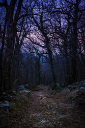 Gloomy path by Koljan