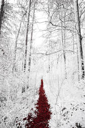 Winter woods and the red path by Koljan