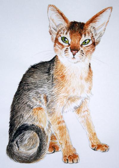 Tommi Watercolor by elen89