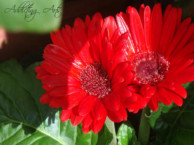 Red Sunshine by AddictingArt