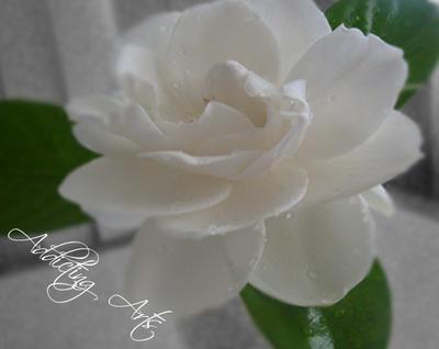 Gardenia by AddictingArt