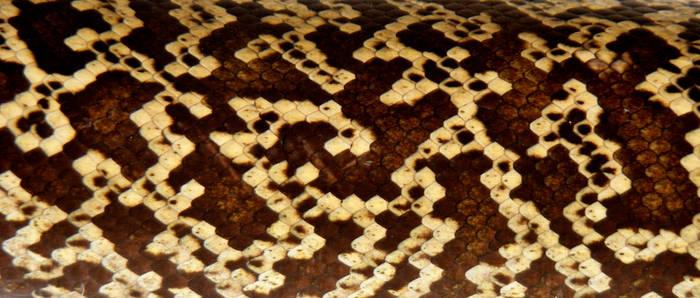 Granite Burmese Python Scales