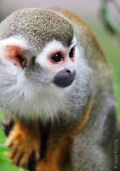 Sweet squirrel monkey by Kluschi