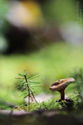 Friends: little mashroom and little fir by Kluschi